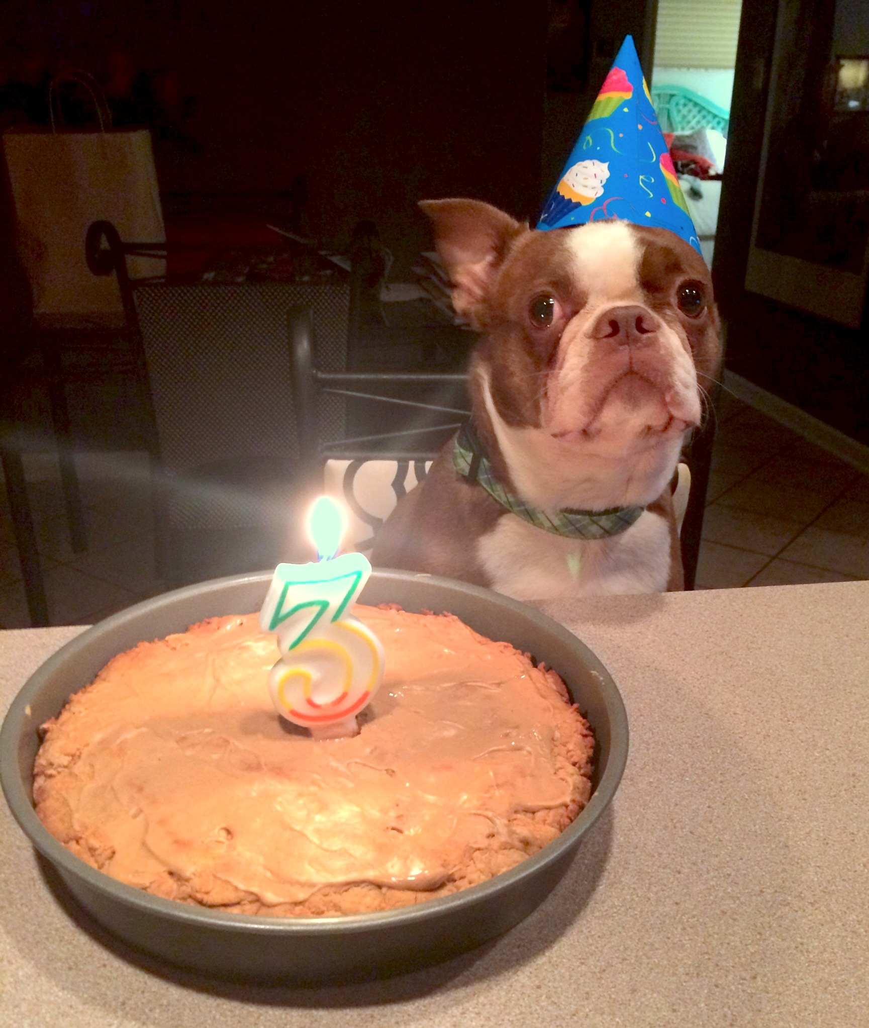 Homemade Birthday Cakes For Dogs Recipe