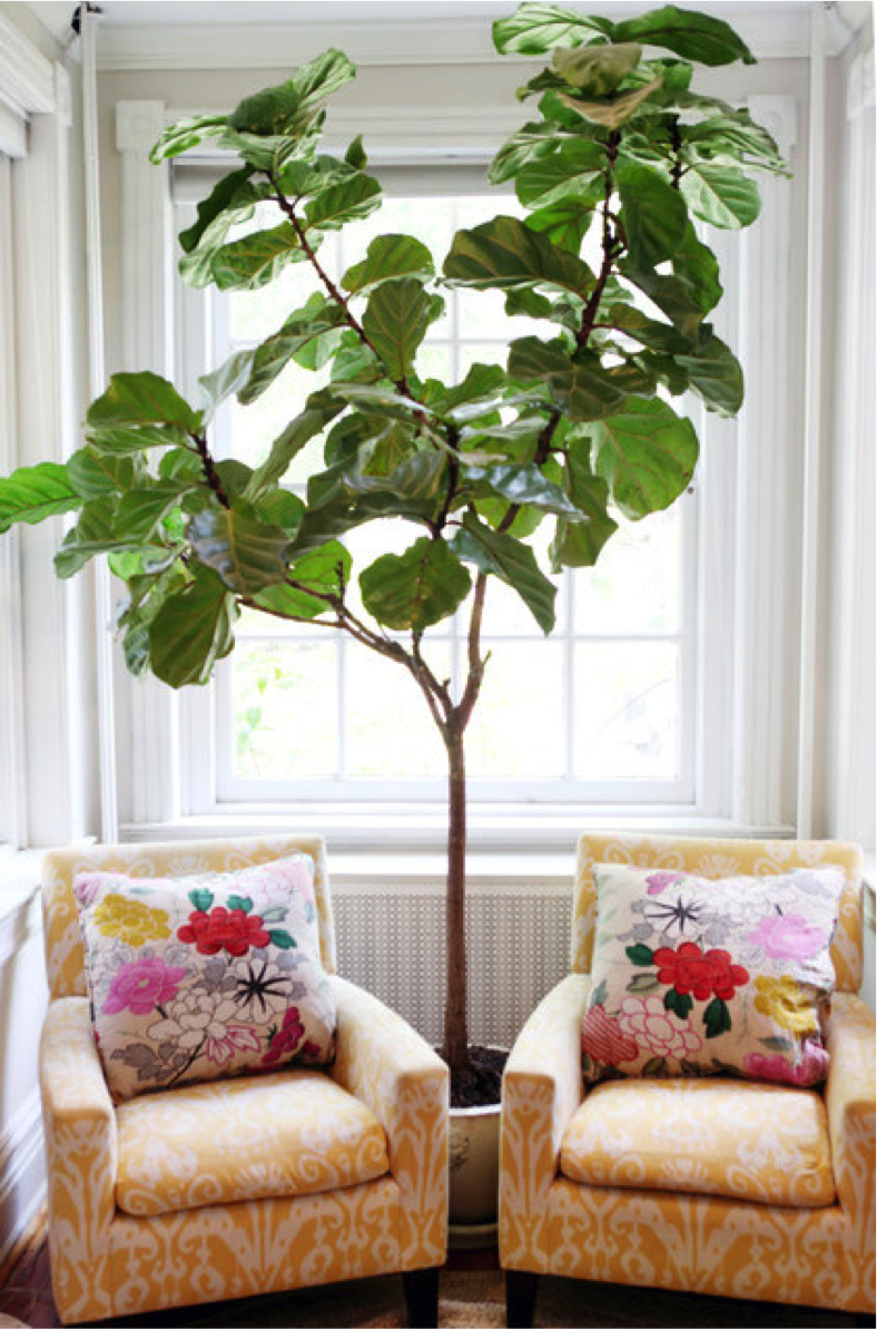 Indoor plants to spruce up your home all year long Large living room plants