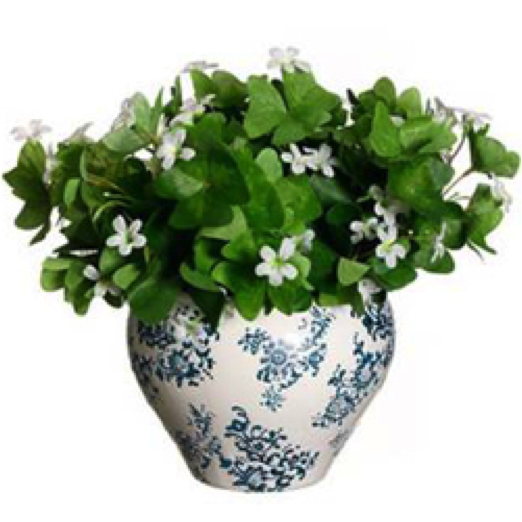 shamrock plant indoor planters3 - White Flowering House Plants
